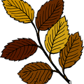 fall-leaves-on-branch