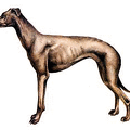 Greyhound-color