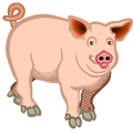 pig-colored