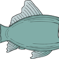 blue-grey-fish
