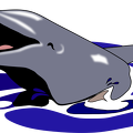 dolphin-open-mouth