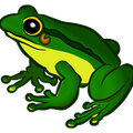 colored-frog